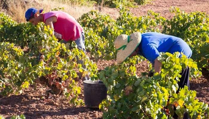 correduría de seguros agrícolas combinados en la Axarquía y Vélez-Málaga