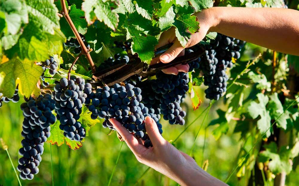 La importancia de los seguros agricolas para preservar los productos y denominaciones de origen de la Axarquía Malagueña