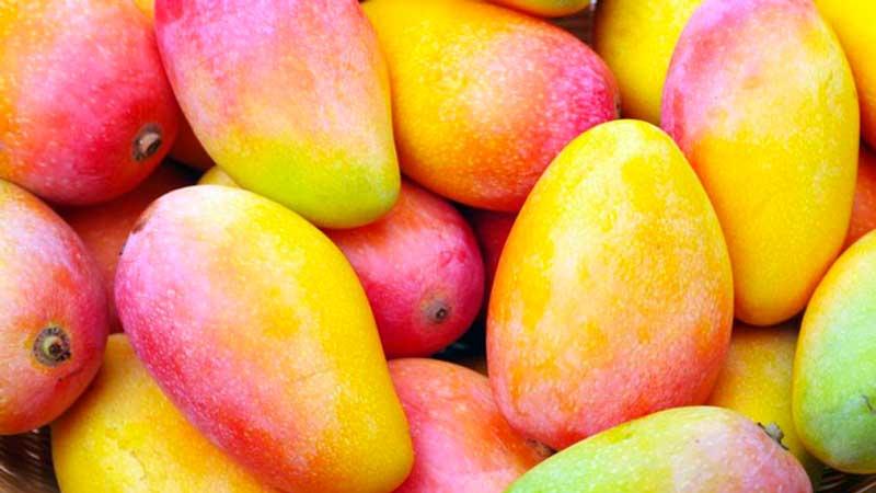 Seguro de Mango en Vélez-Málaga y Axarquía